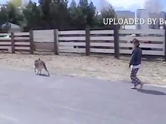 Coletas para perro