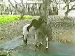 Gostosa Pra Cachorro