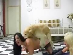 El perro me chupa el culo