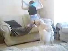 my sofa and my dog